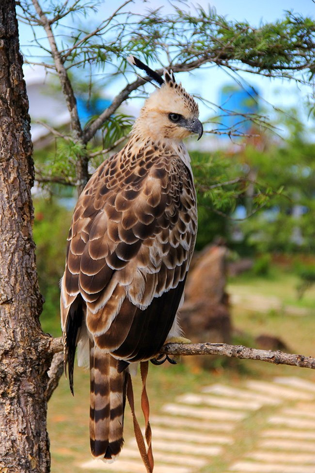 eagle-at-langbiang-dalat