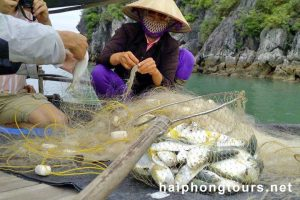 Be farmer Halong Grayline Cruise