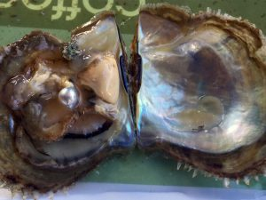 Visit pearl farm on Halong bay within one day